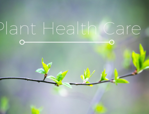 Plant Health Care Services