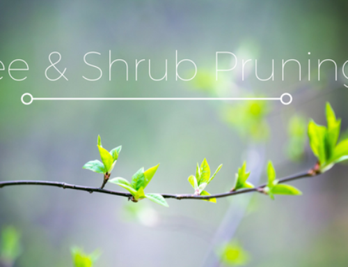 Tree and Shrub Pruning