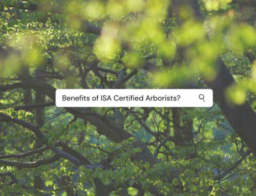 Benefits of Hiring a Certified Arborist