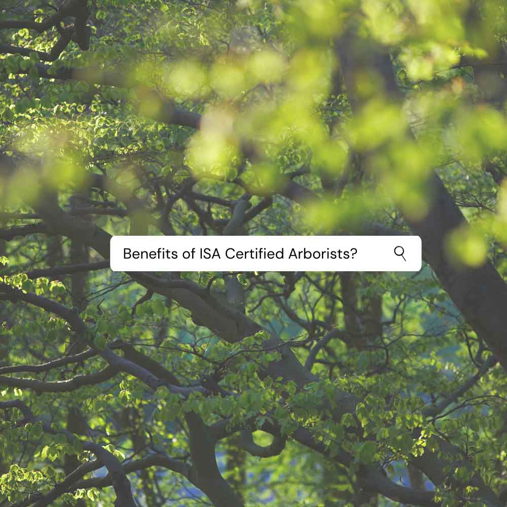 Benefit of Hiring a Certifed Arborist