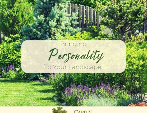 Bringing Personality Into Your Landscape